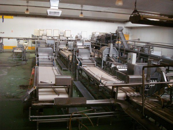 FMC Peach processing line