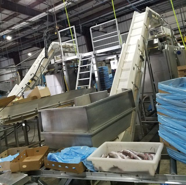 2 Marel 081-S008-39533008 HIGH SPEED BATCHING LINES WITH CHECK WEIGHER