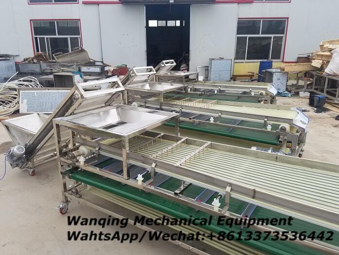 Cherry sorting machine which professional