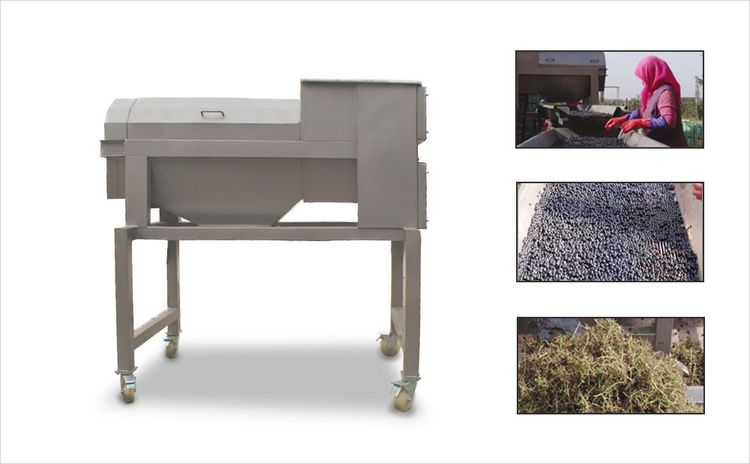 Others Grape Destemmer Machine & Grape Stemming Machine Grape Destemmer Machine & Grape Stemming Machine